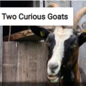 Two Curious Goats Jigsaw Puzzle Game