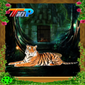 Top10 Rescue The Tiger