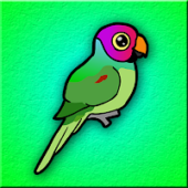G2J Plum Headed Parakeet Escape