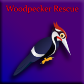 G2J Woodpecker Rescue