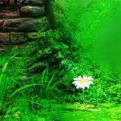 BEG Fantasy River Forest Escape