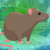 G4K Rodent Brown Rat Escape