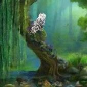 FUN Hidden Owl Forest Fun Escape