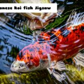 8B Japanese Koi Fish Jigsaw