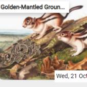 Golden-Mantled Ground Squirrels Jigsaw