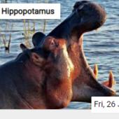 Hippopotamus Jigsaw