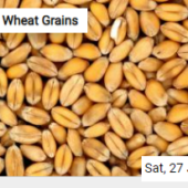 Wheat Grains Jigsaw
