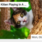 Kitten Playing In A Tree Jigsaw