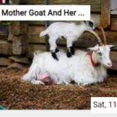 Mother Goat And Her Kid Jigsaw
