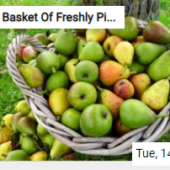 Basket Of Freshly Picked Pears Jigsaw