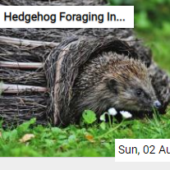 Hedgehog Foraging In The Grass Jigsaw