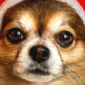 Chihuahua In Reindeer Costume Jigsaw Puzzle Game