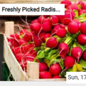 Freshly Picked Radishes Jigsaw
