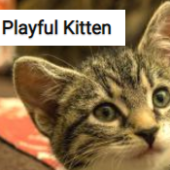 Playful Kitten Jigsaw Puzzle Game