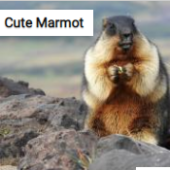 Cute Marmot Jigsaw Puzzle Game