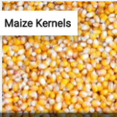 Maize Kernels Jigsaw Puzzle Game