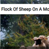 Flock Of Sheep On A Mountain Trail Jigsaw Puzzle Game